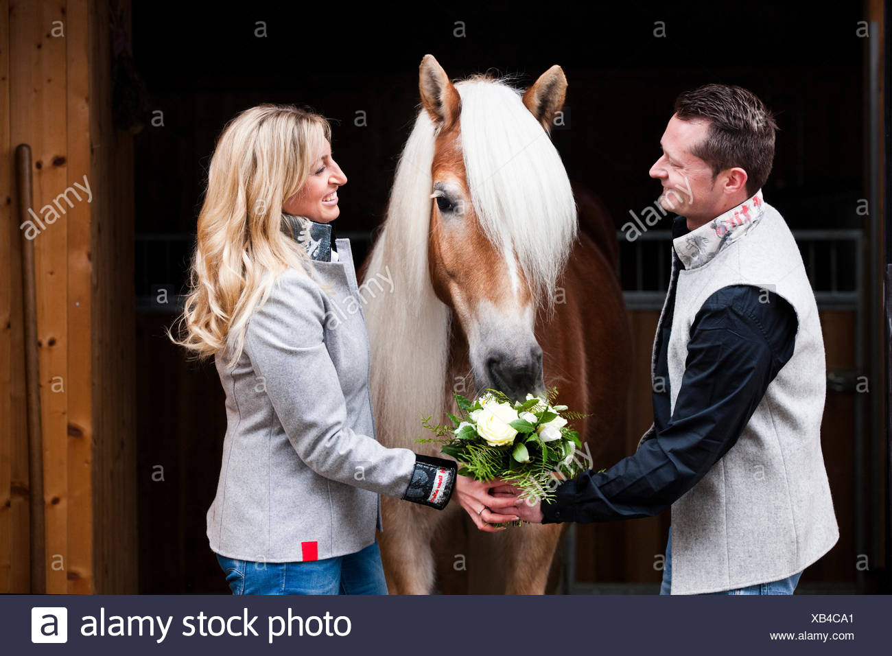 Man giving a woman flowers, Tyrolean Haflinger eating the flowers, North Tyrol, Austria - Stock Image