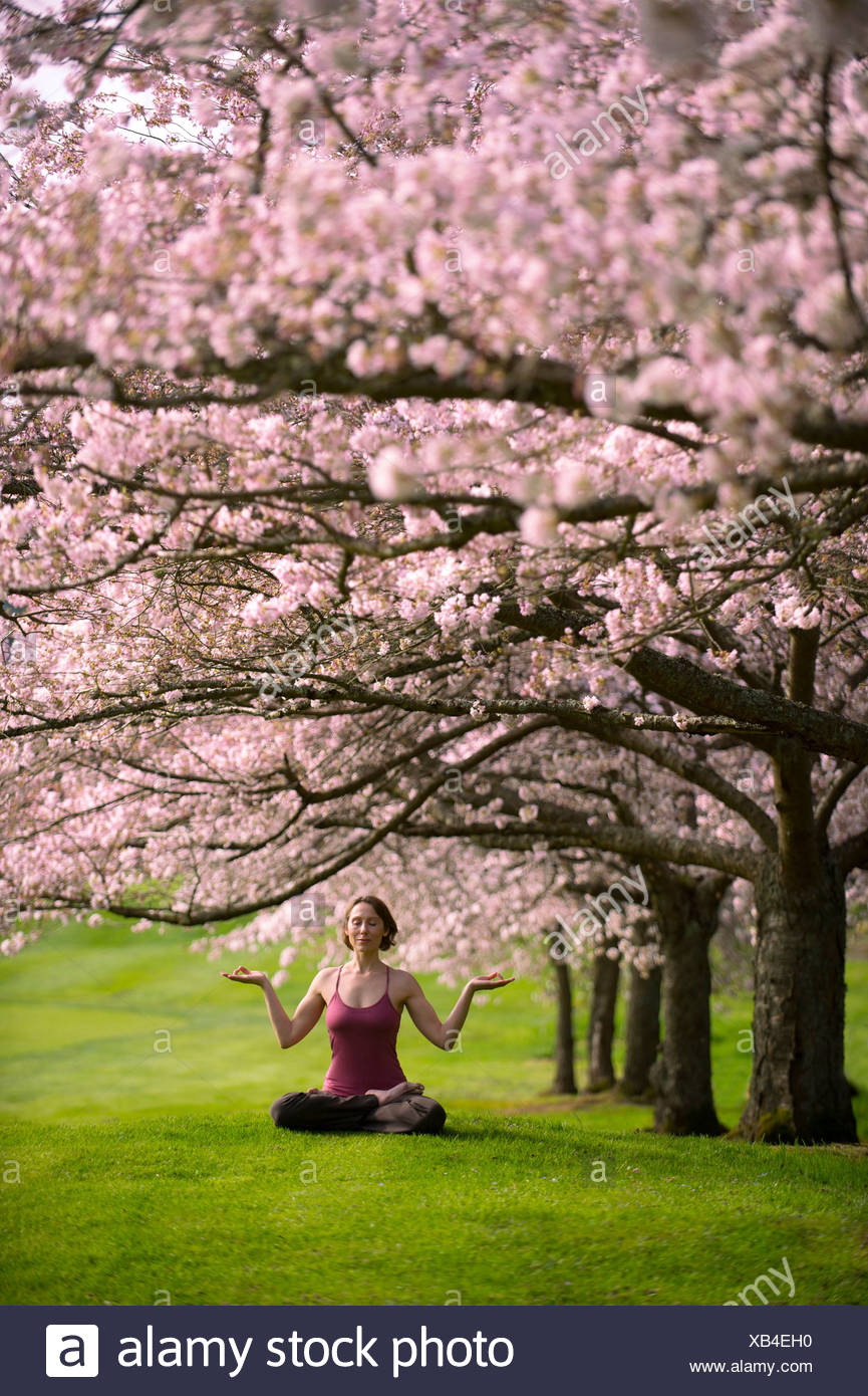 Woman in lotus position under cherry tree - Stock Image