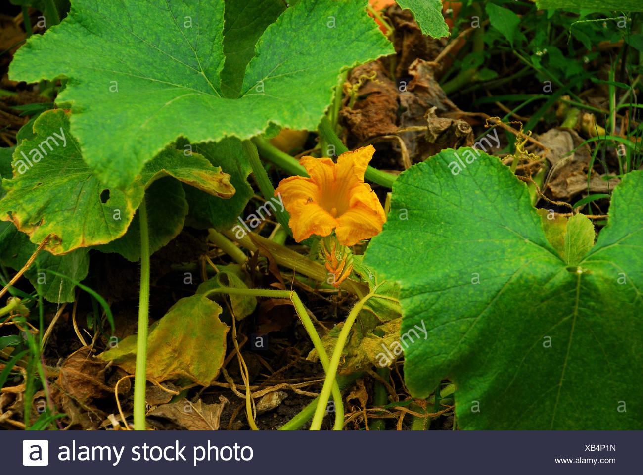 Yellow bell shaped flower stock photos yellow bell shaped flower flower plant bell shaped yellow glass chalice tumbler flower plant bloom stock image mightylinksfo Images