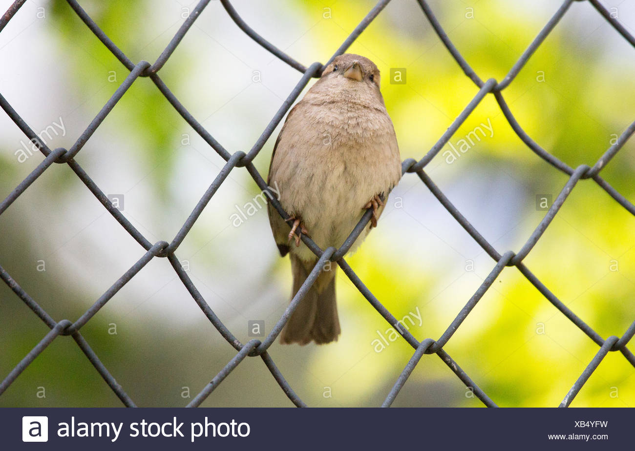 Bild in a fence - Stock Image