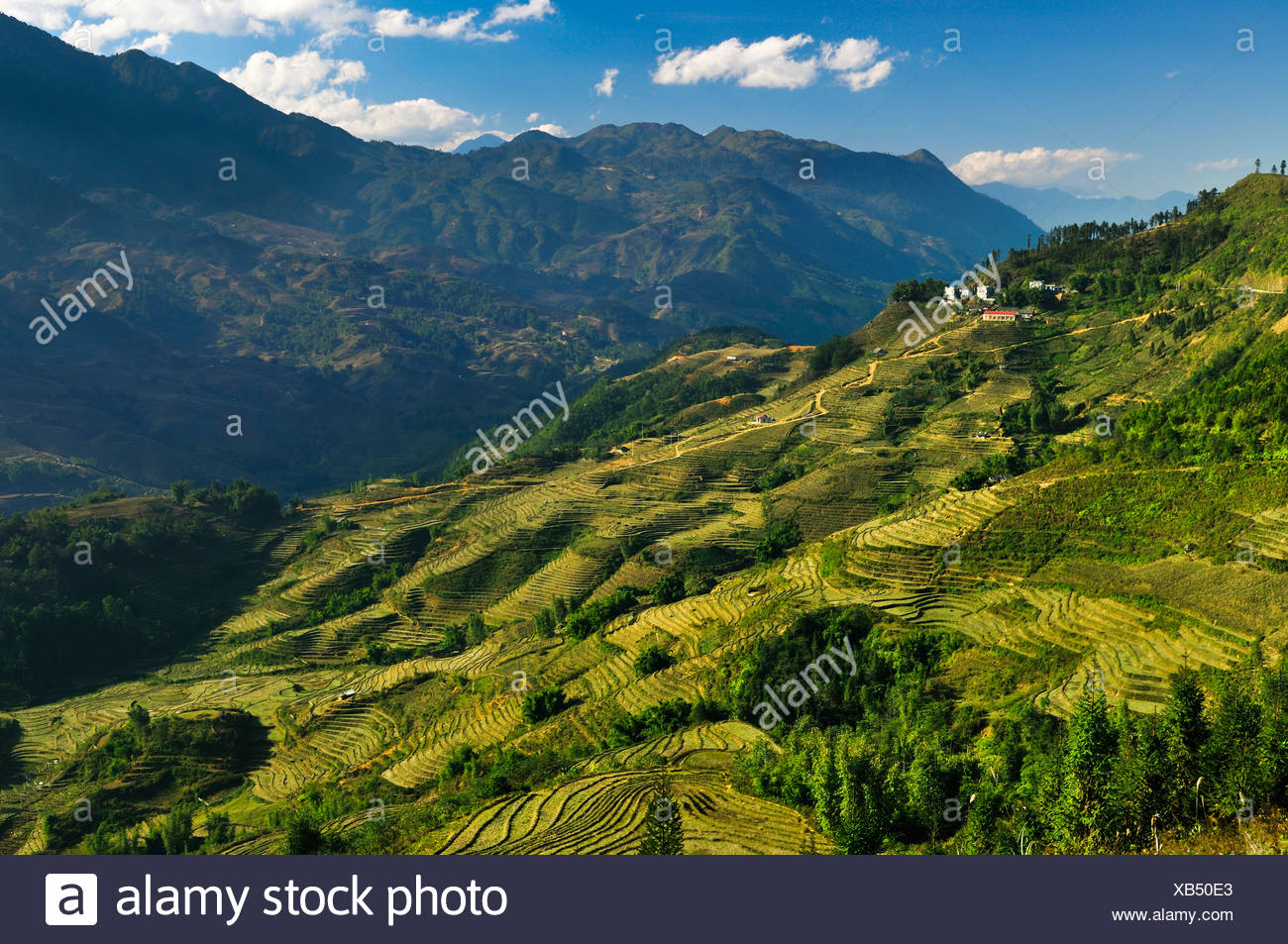 Green rice terraces, rice paddies in Sapa or Sa Pa, Lao Cai province, northern Vietnam, Vietnam, Southeast Asia, Asia - Stock Image