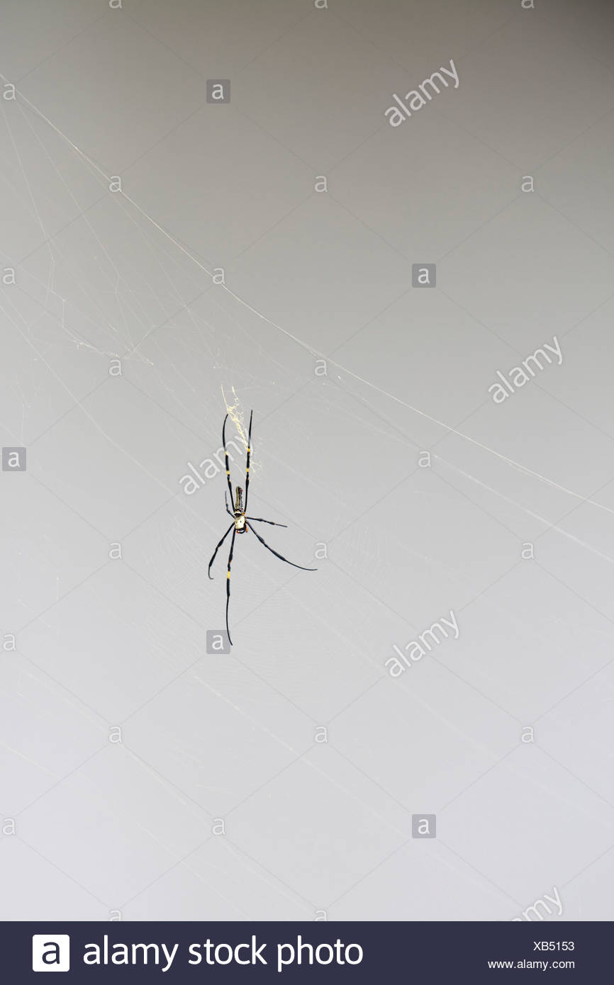 Spider at Hellfire Pass, near Kanchanaburi, Thailand - Stock Image