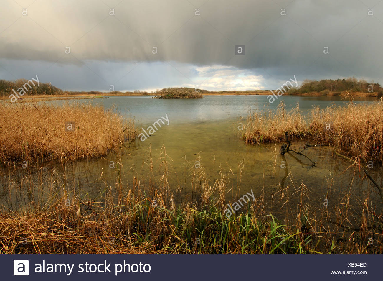 Dikke wolkenlucht boven eiland in duinmeer;Thick clouds above island in lake - Stock Image