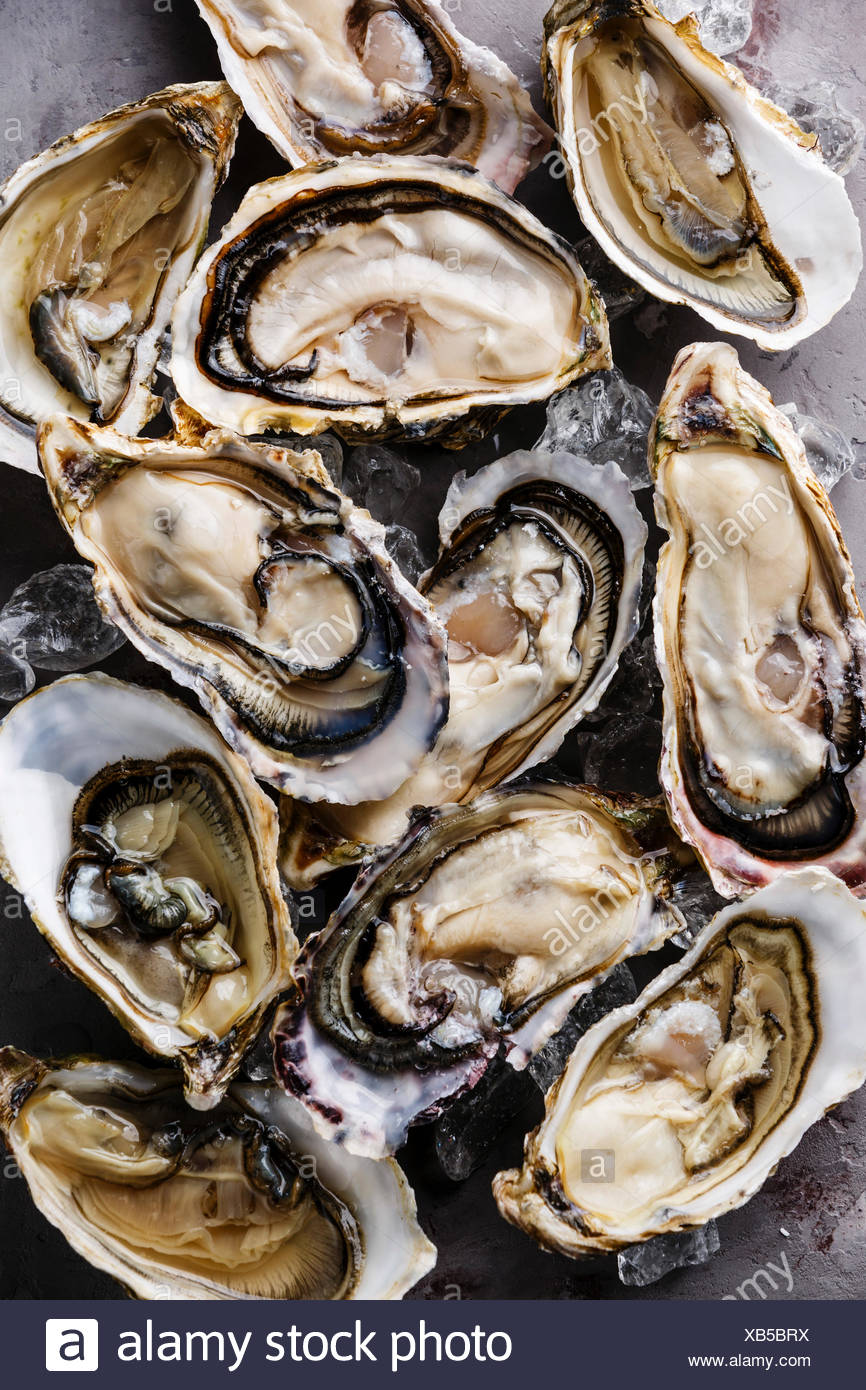 Oysters background with Open Oyster and ice - Stock Image