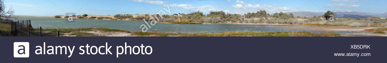 Lagune Charco de Maspalomas - Stock Image
