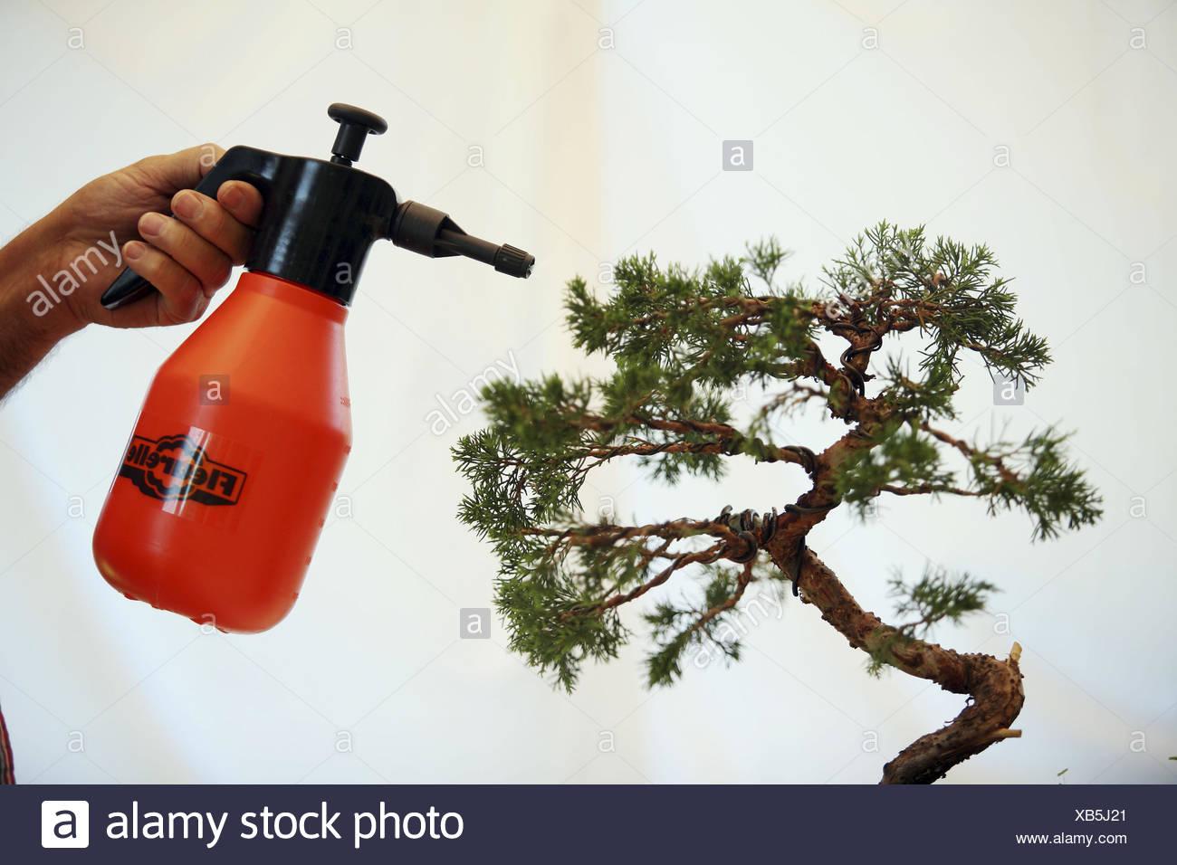 Watering Bonsai Stock Photo Alamy