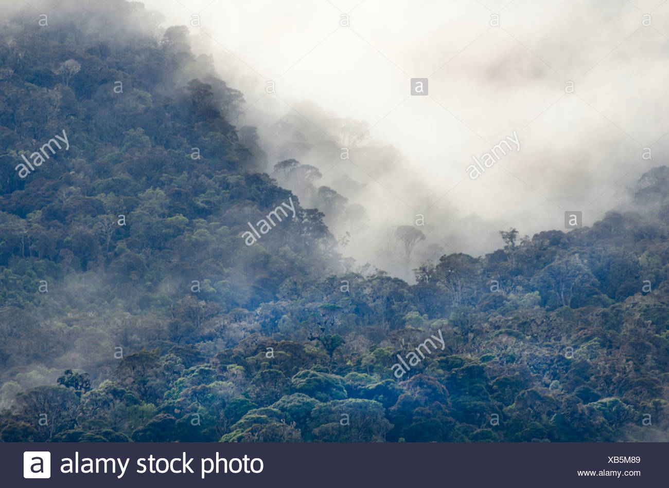 Montane Rainforest around Mt Hagen in Western Highlands of Papua New Guinea - Stock Image