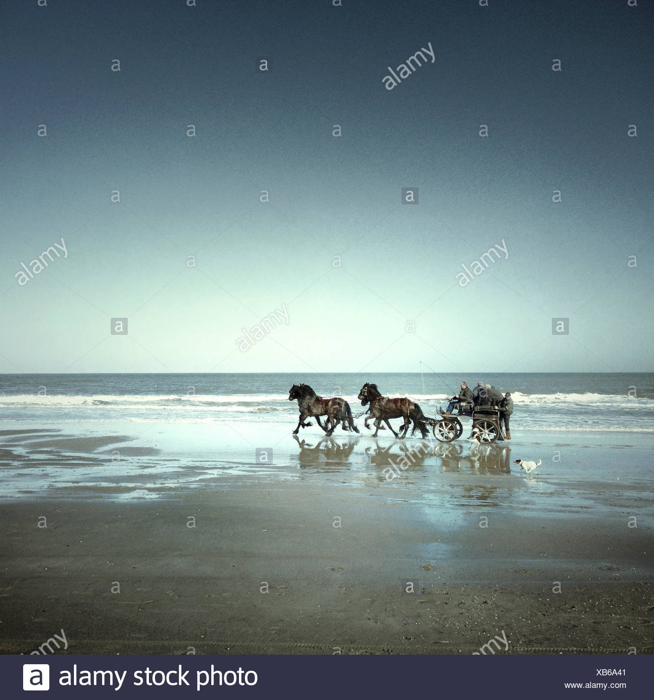 Horses and cart on beach Stock Photo