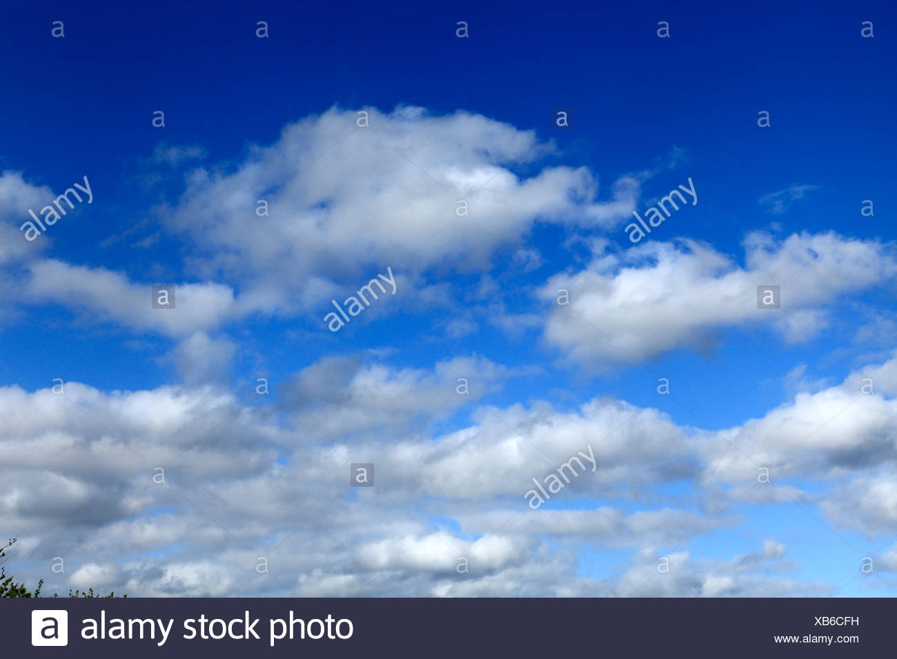 White cumulus clouds, blue sky cloud skies UK - Stock Image