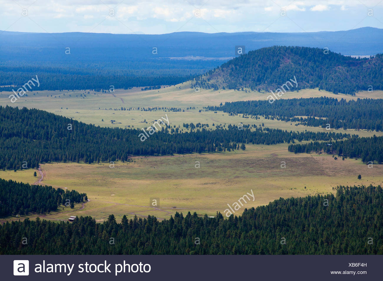 Large meadows as seen from the Kendrick Mountain Trail in the Kaibab National Forest. - Stock Image