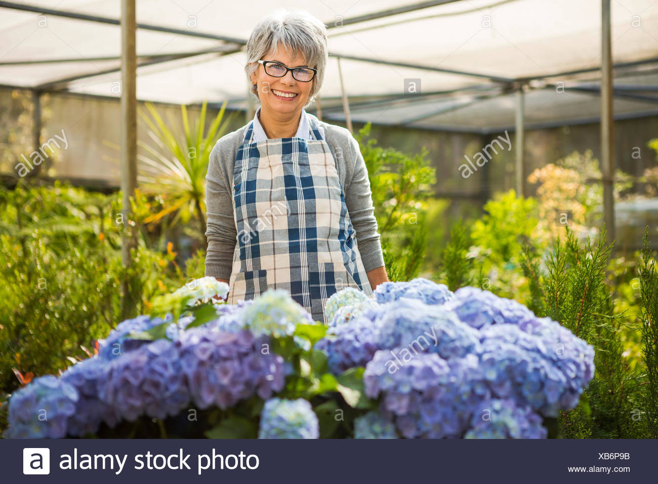 A day in a green house - Stock Image