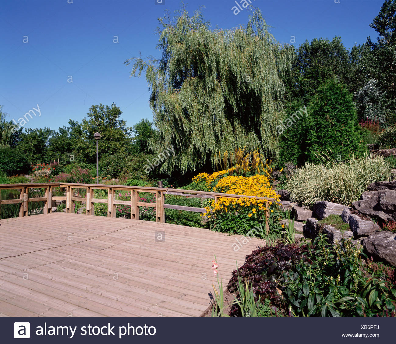Deck and plants in garden - Stock Image