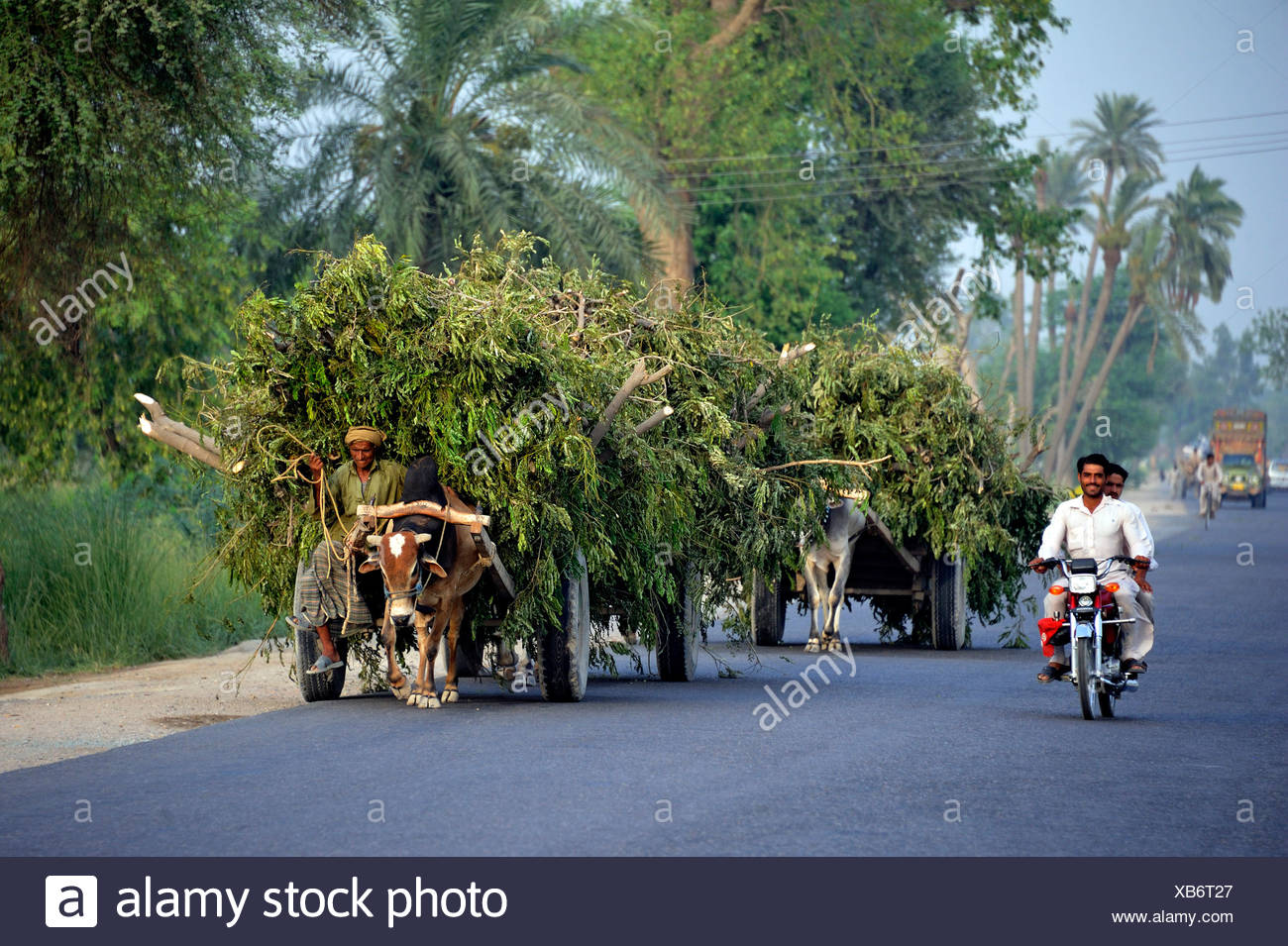 Motorbike and bullock carts, different means of transportation on a paved road near Muzaffaragarh, Punjab, Pakistan, Asia - Stock Image