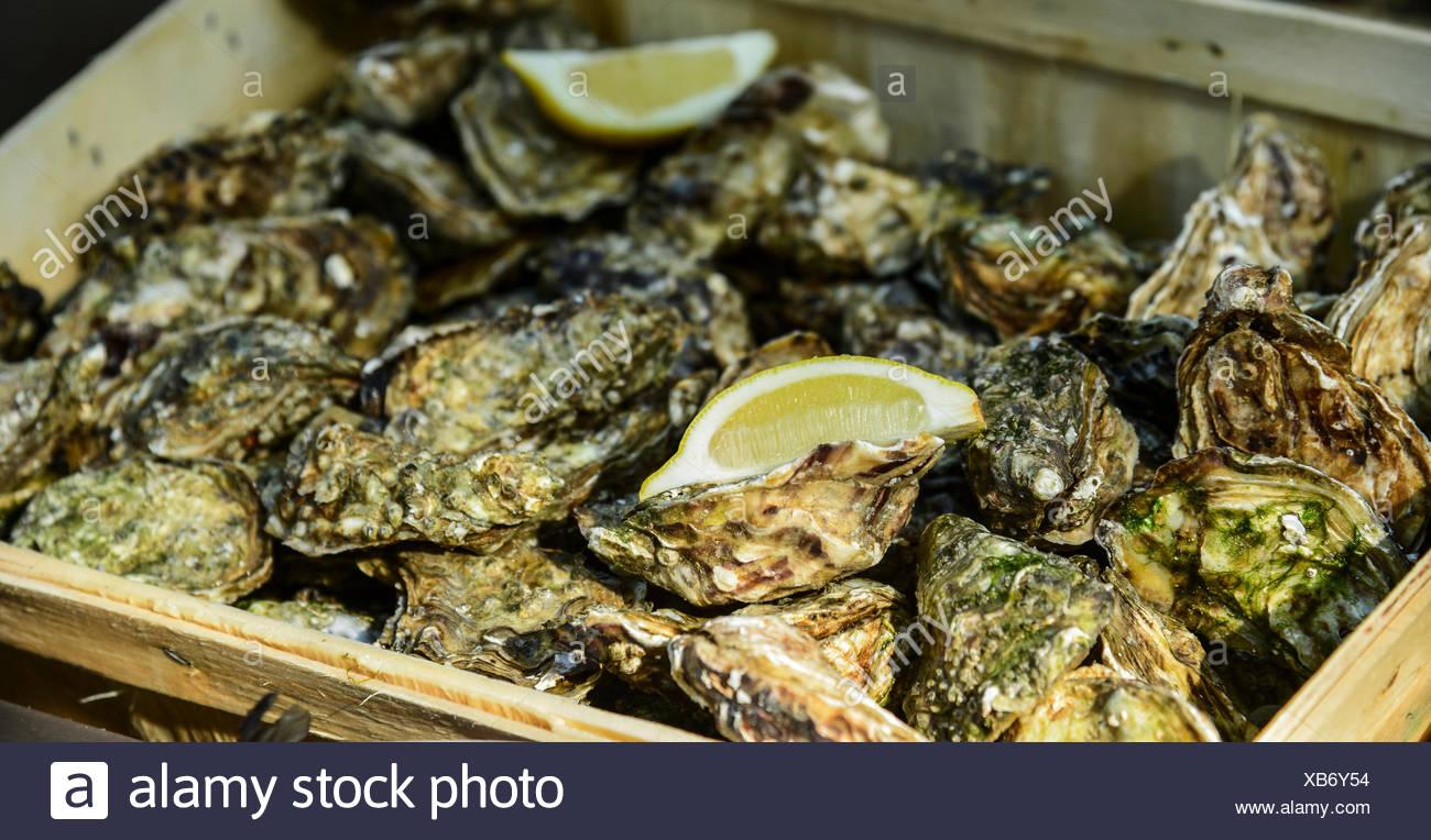 Oysters with lemon, Montmartre, Paris, Île-de-France, France - Stock Image