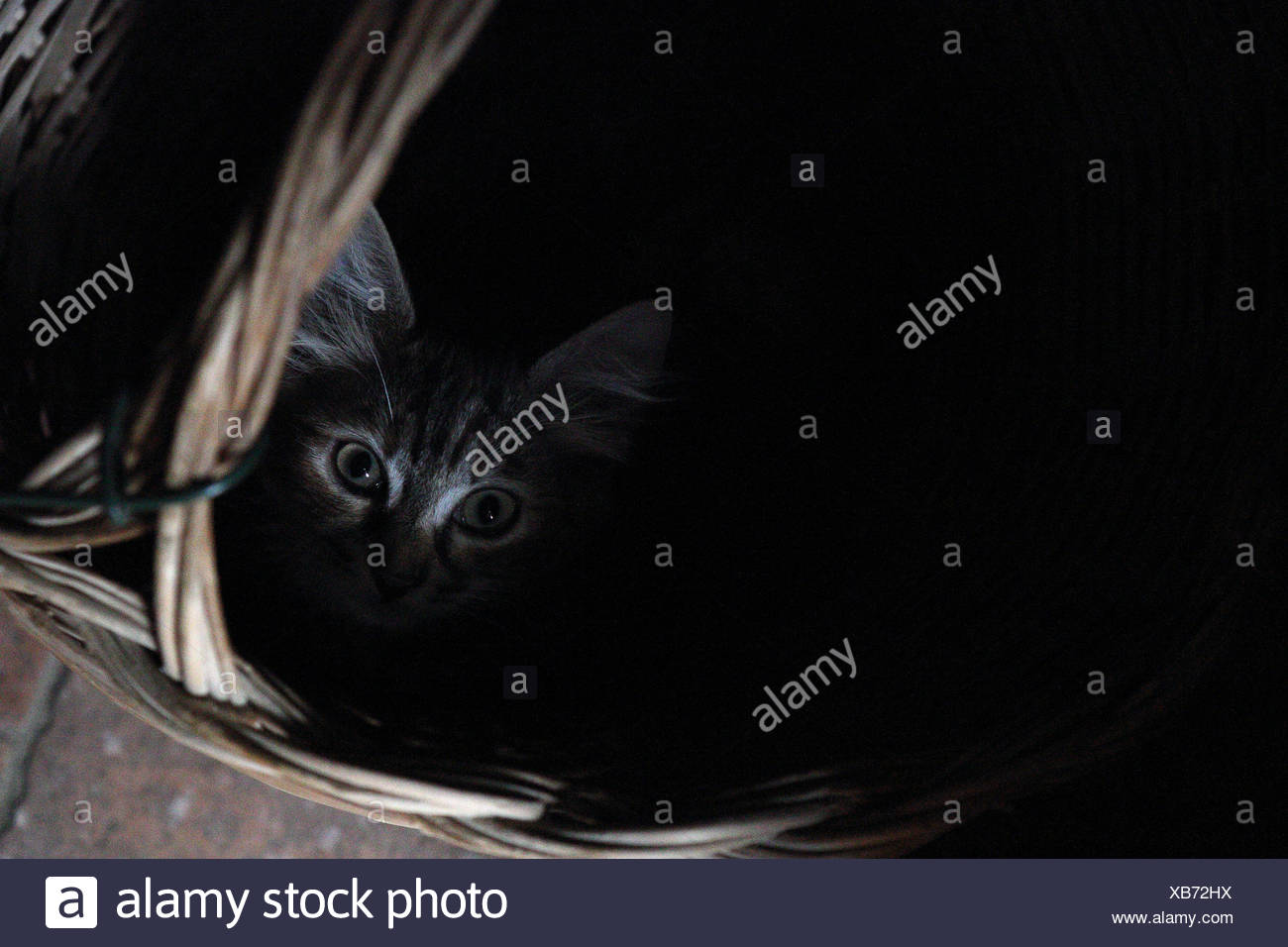 Acquapendente, Italy, cat sitting scared in a bast basket - Stock Image