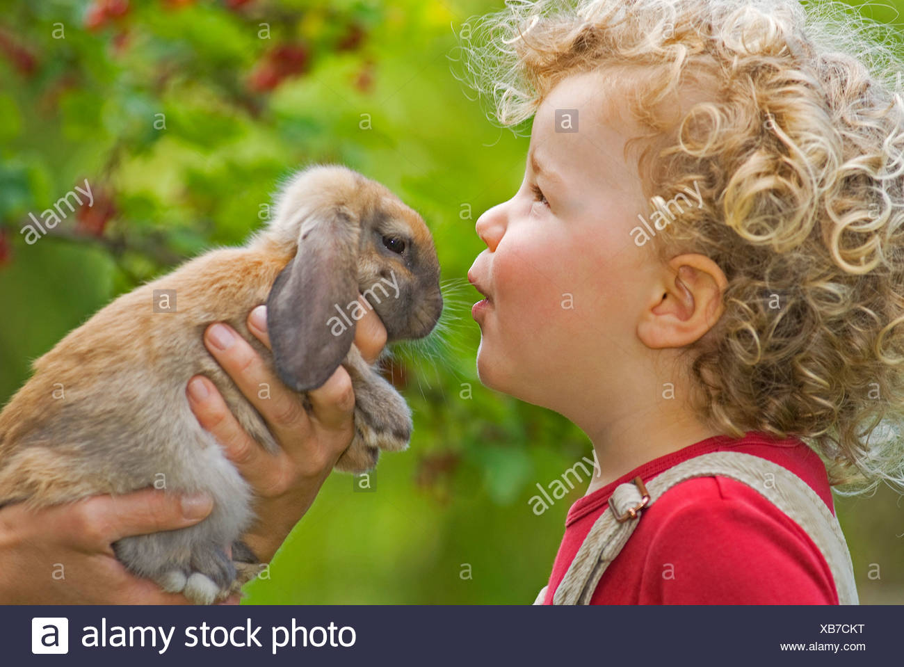 Blonde girl (4-5) with curly hair holding rabbit, portrait - Stock Image