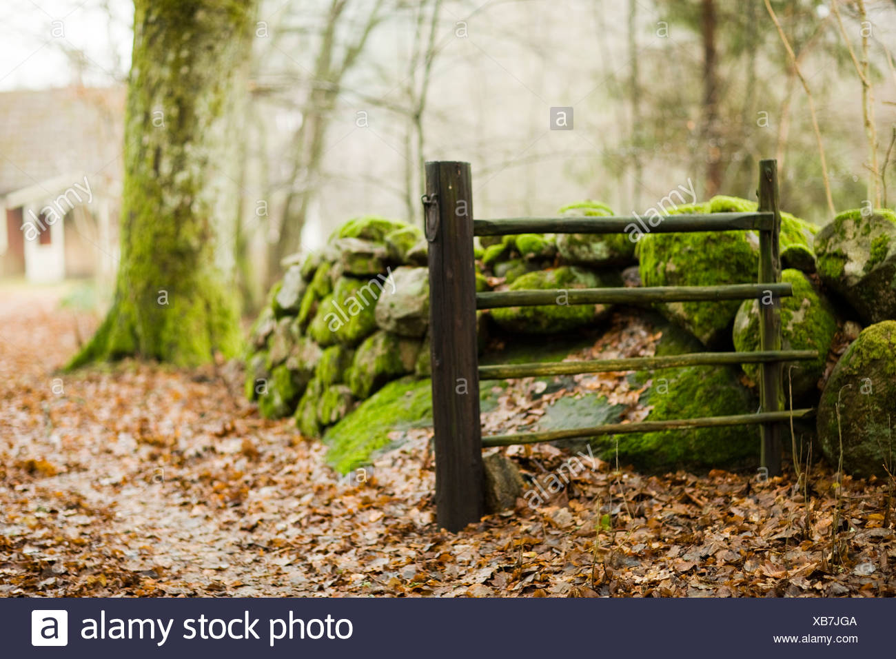 Scandinavian Peninsula, Sweden, Skane, View of moss covered stone and fence with cottage in background Stock Photo