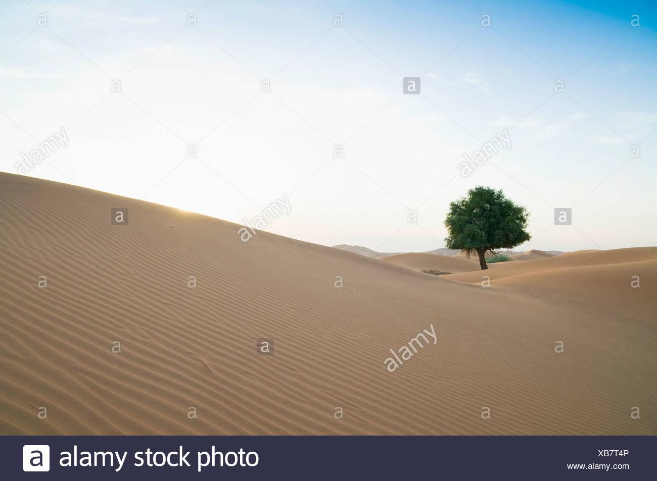Rub' al Khali desert on the border of Oman and the Emirate of Dubai, Middle East, Southwest Asia - Stock Image