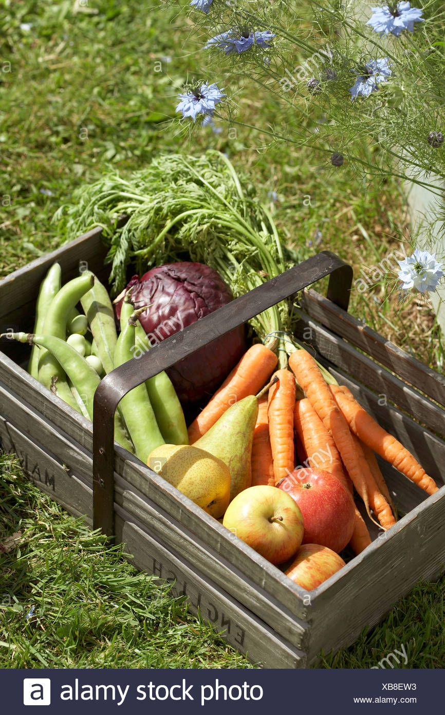 Fresh Fruit And Vegetables In A Wooden Basket On Grass   Stock Image