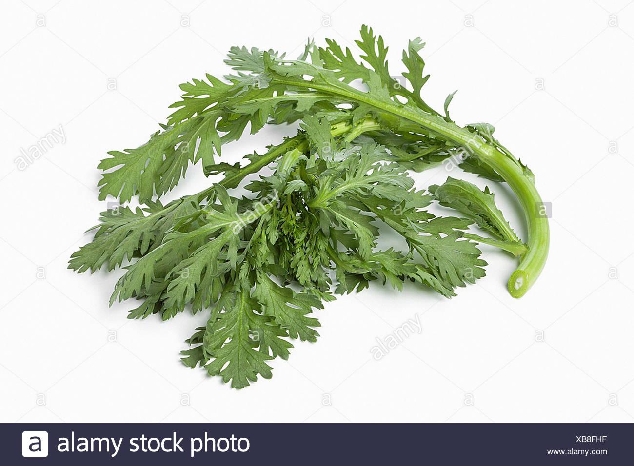 Twig of fresh green Shungiku on white background Stock Photo