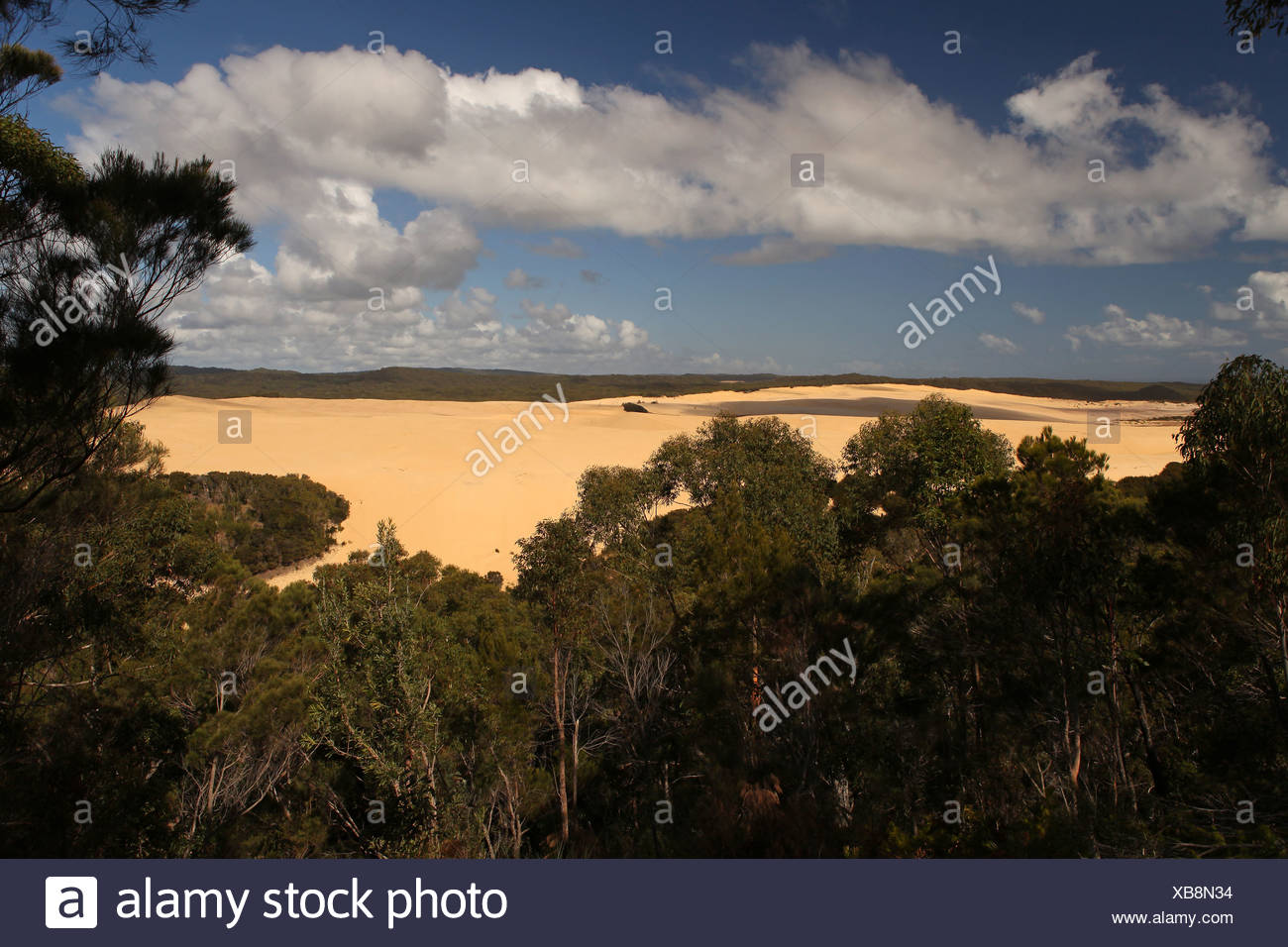 Sand dune, Sandblow, dune, sand, island, primeval forest, trees, Fraser Island, Queensland, Australia, view, edge out, wind, clo - Stock Image