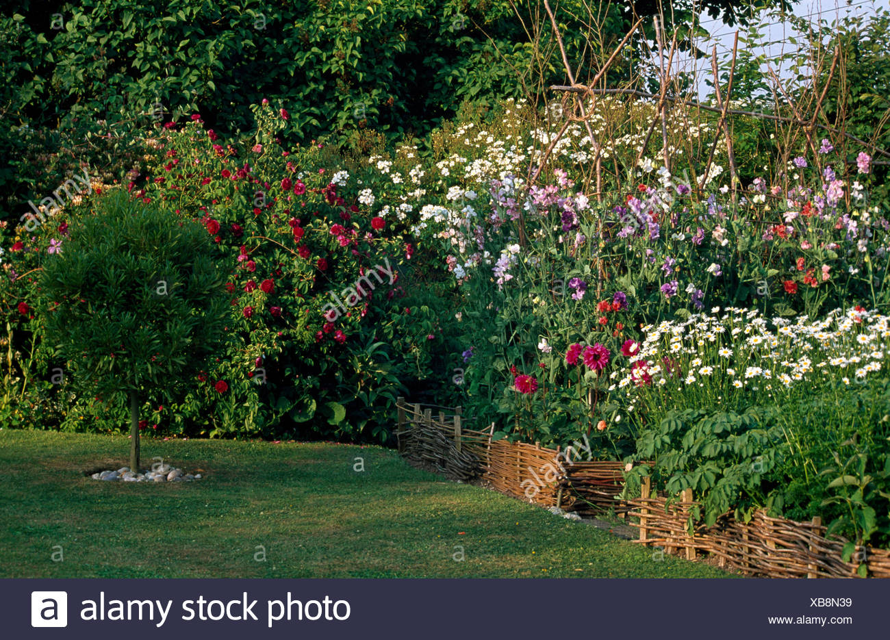 Genial Low Willow Fence Edging Summer Bed With A Row Of Sweet Peas In Country  Garden With