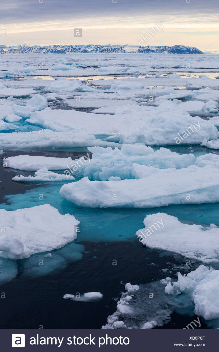 Pack ice, north of Spitsbergen Island, Svalbard Archipelago, Arctic Norway. - Stock Image