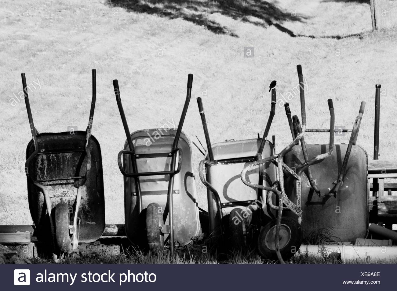 Wheelbarrows On Field - Stock Image