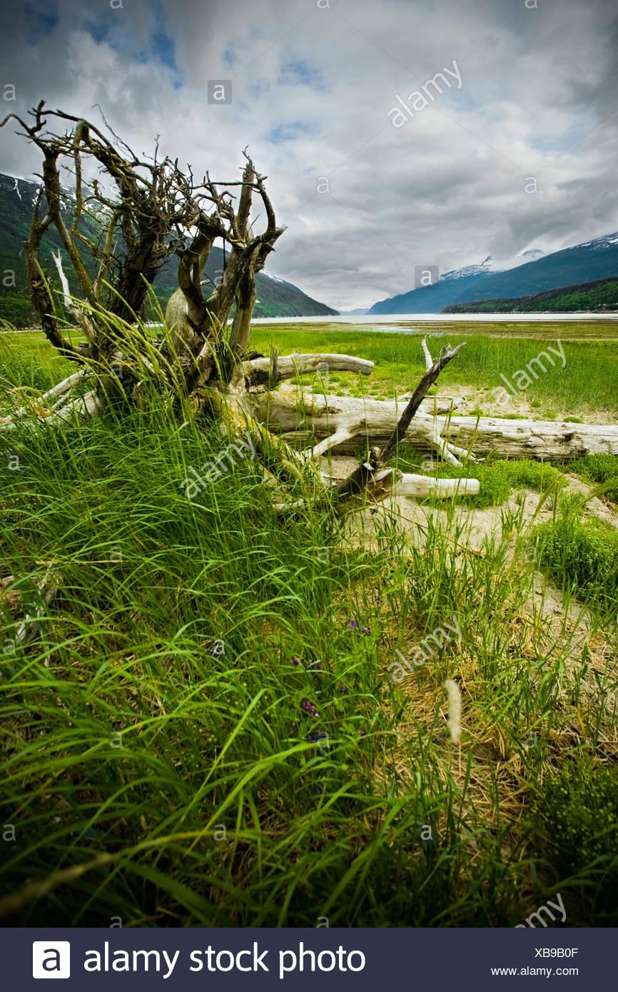 Dyea tidal flats, Skagway, Alaska - Stock Image