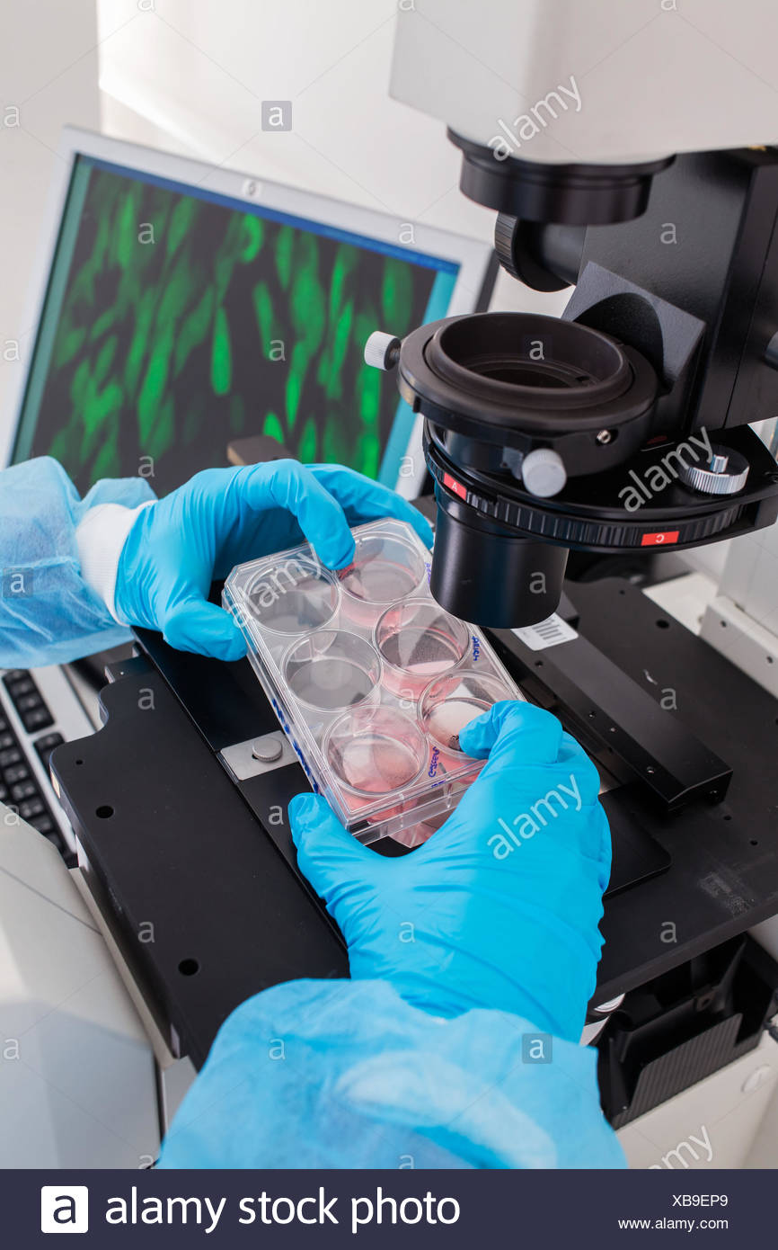 Cultures of cells in liquid medium, Biology and Research Center (CBRS). Stock Photo