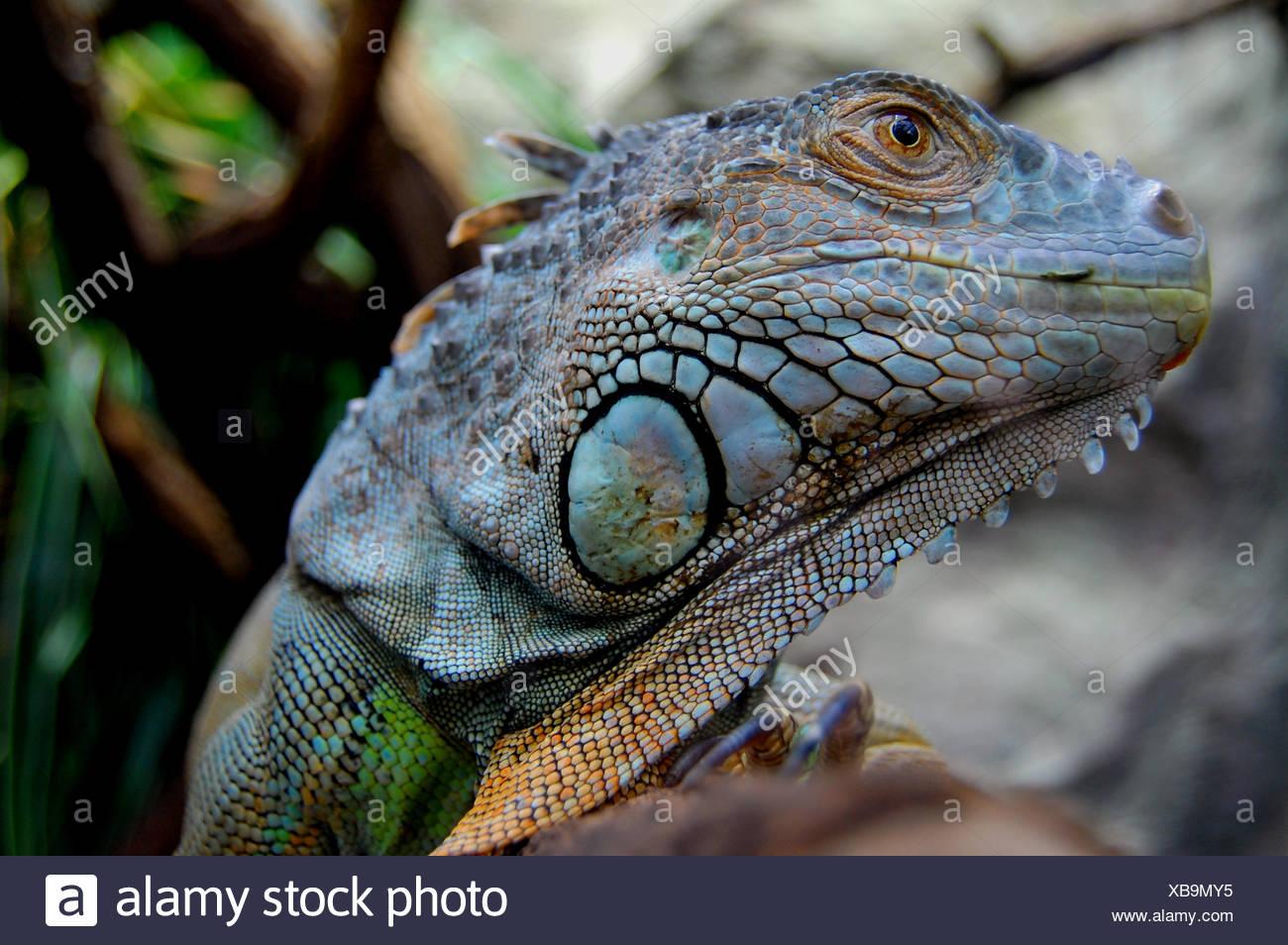 reptiles amphibians - Stock Image