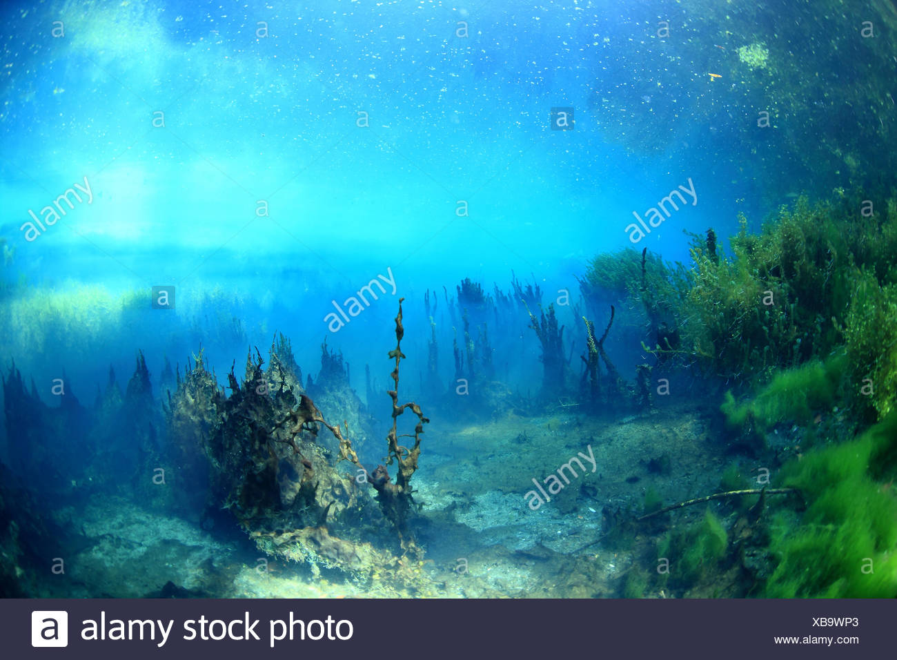 Bacterial mats and decomposition - Backwater Rhone France Stock Photo