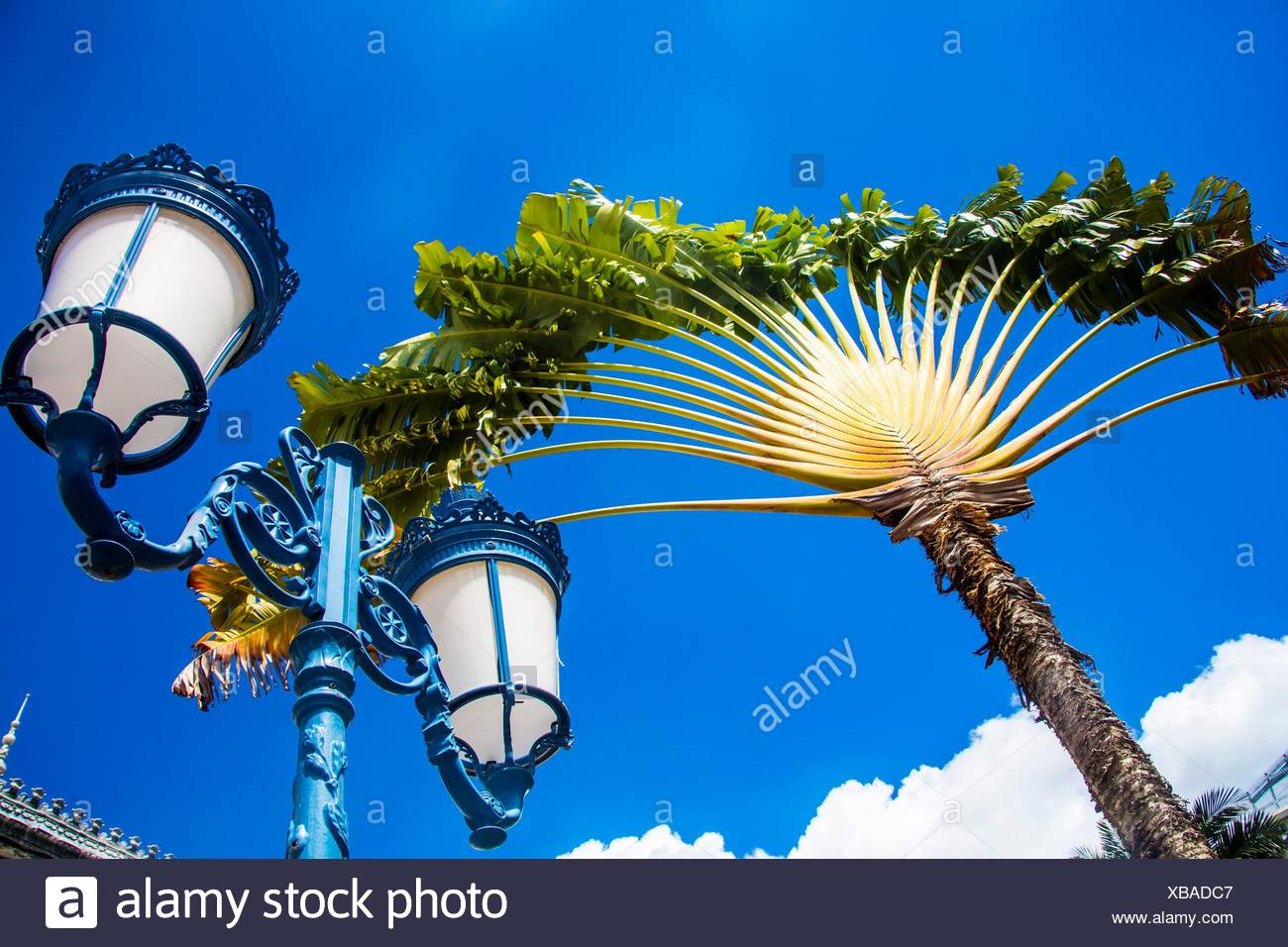 Beautiful palm tree typical to Martinique looking like a fan next to a old fashion lamp post agains a incredible blue sky. - Stock Image
