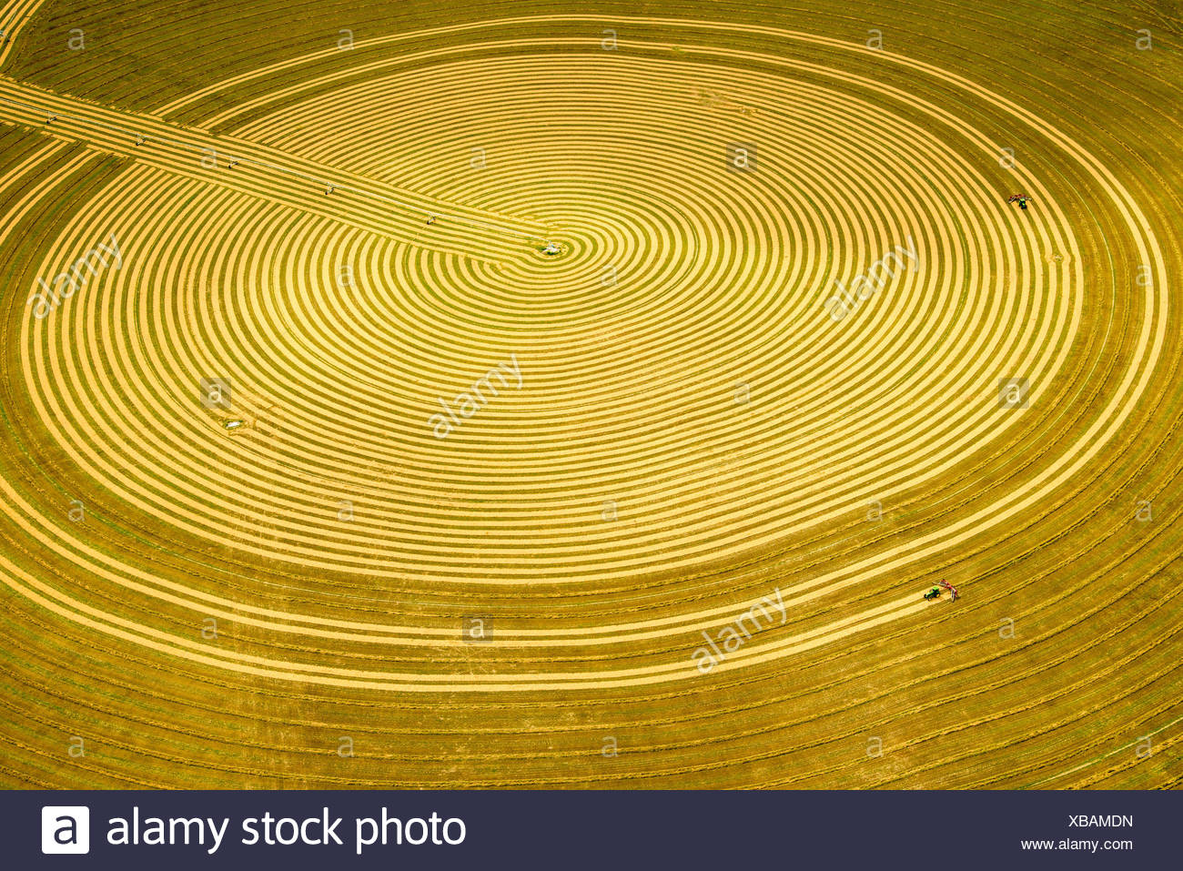 A farmer rakes hay into windrows following the circular pattern of pivot irrigation. - Stock Image