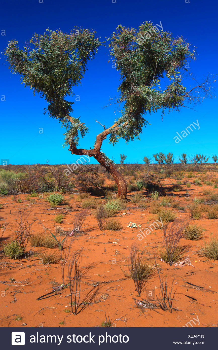 dry landscape at the Australian outback, Australia, Western Australia, Agnew Sandstone Road, Leinster - Stock Image