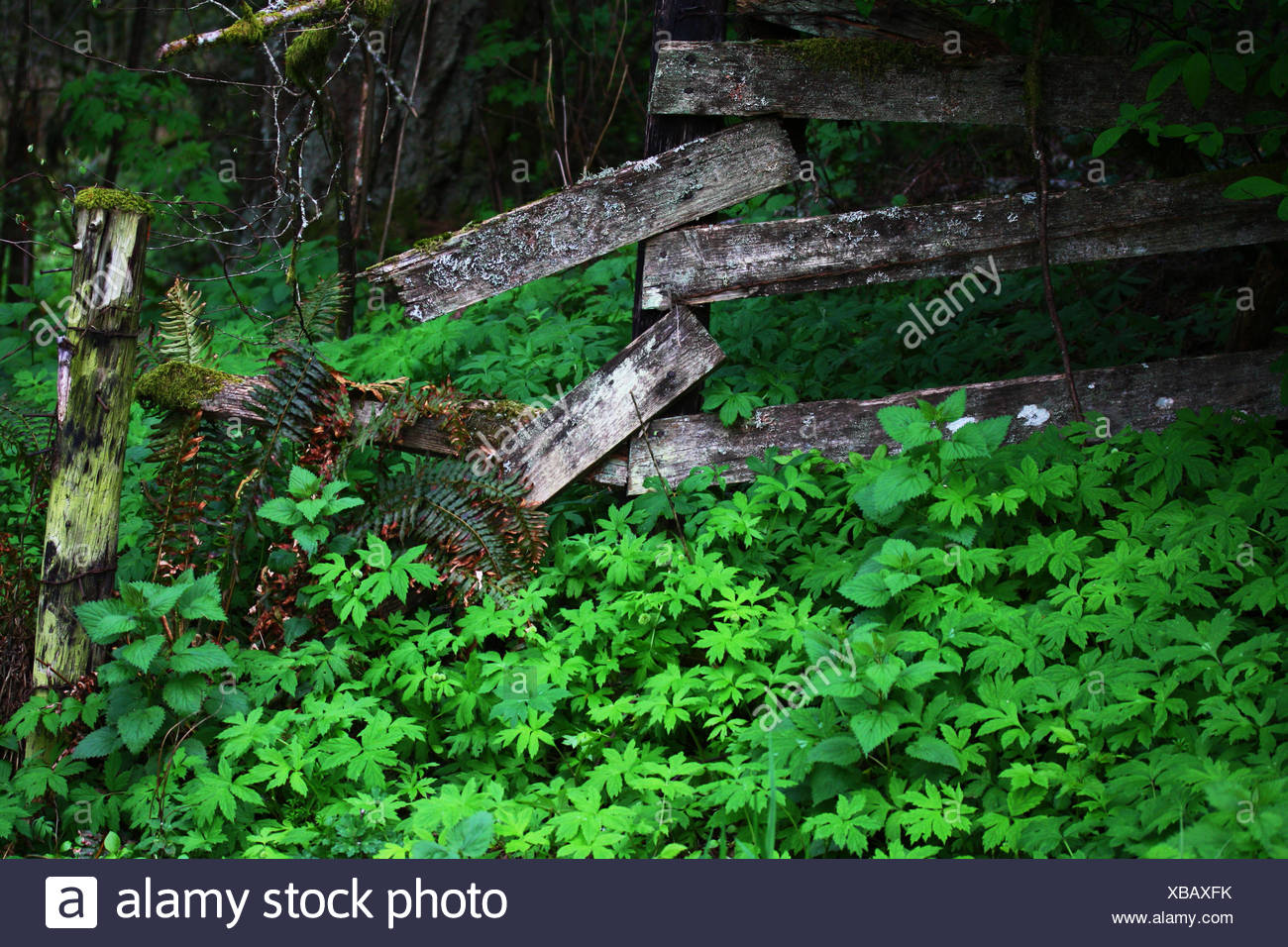 Fenced in - Stock Image