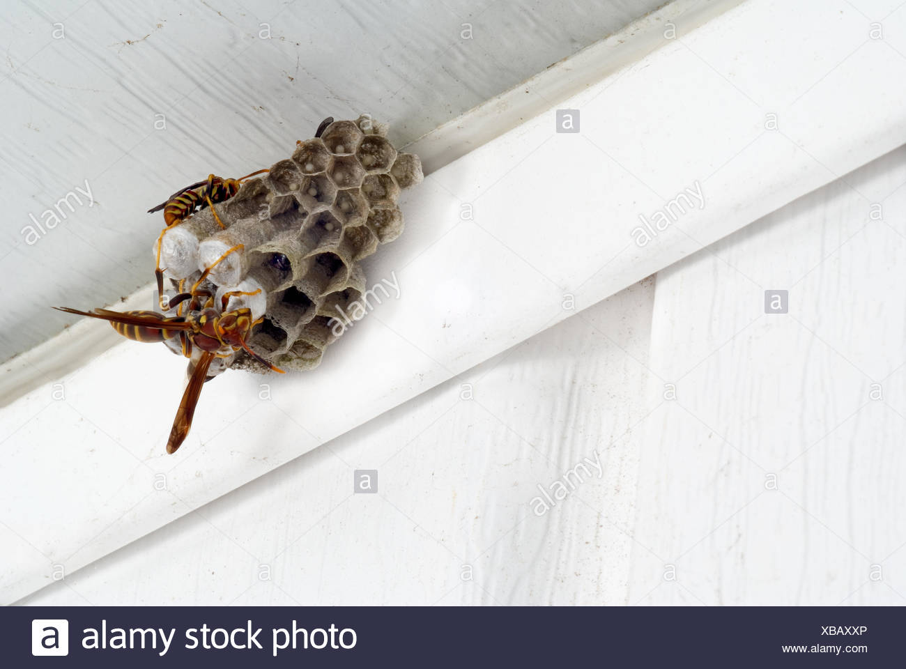 Hornets Nest Hive Stock Photos & Hornets Nest Hive Stock Images ...