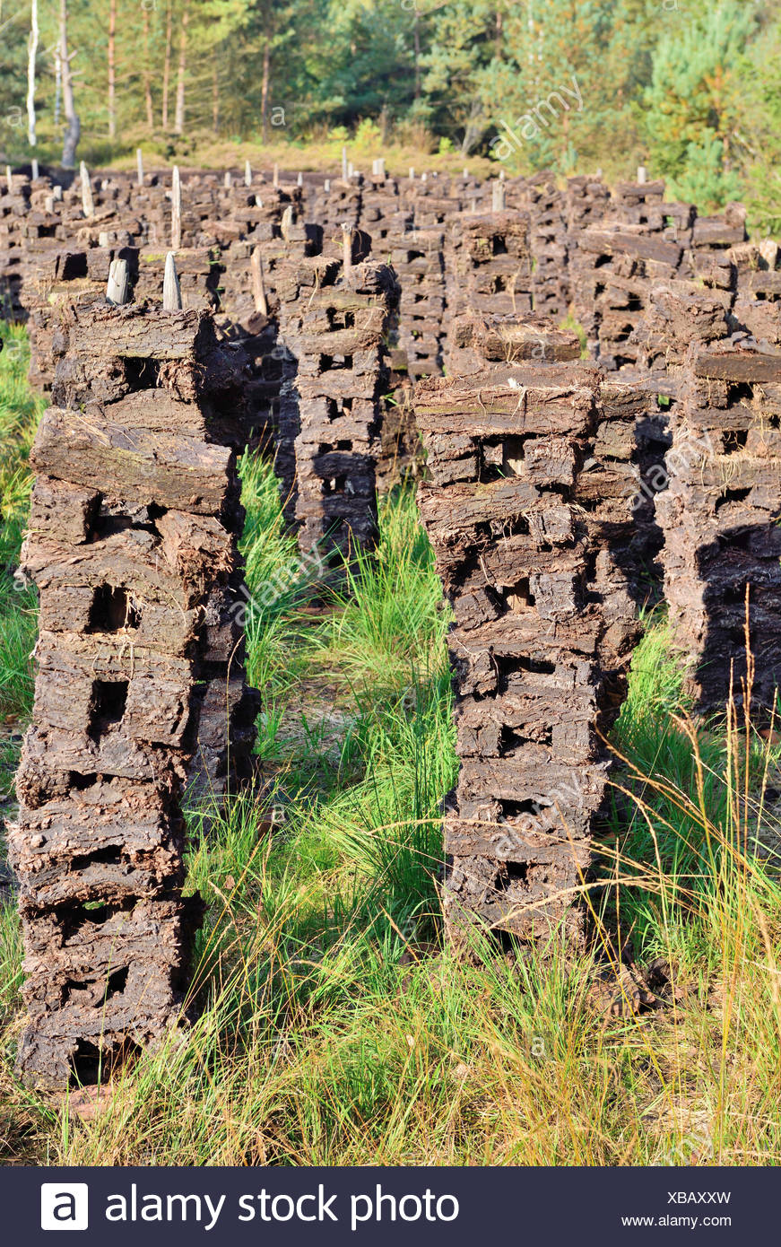 Stacks of peat sods left or drying in the traditional manner, Grundbeckenmoor Rosenheim, near Raubling, Upper Bavaria, Bavaria - Stock Image
