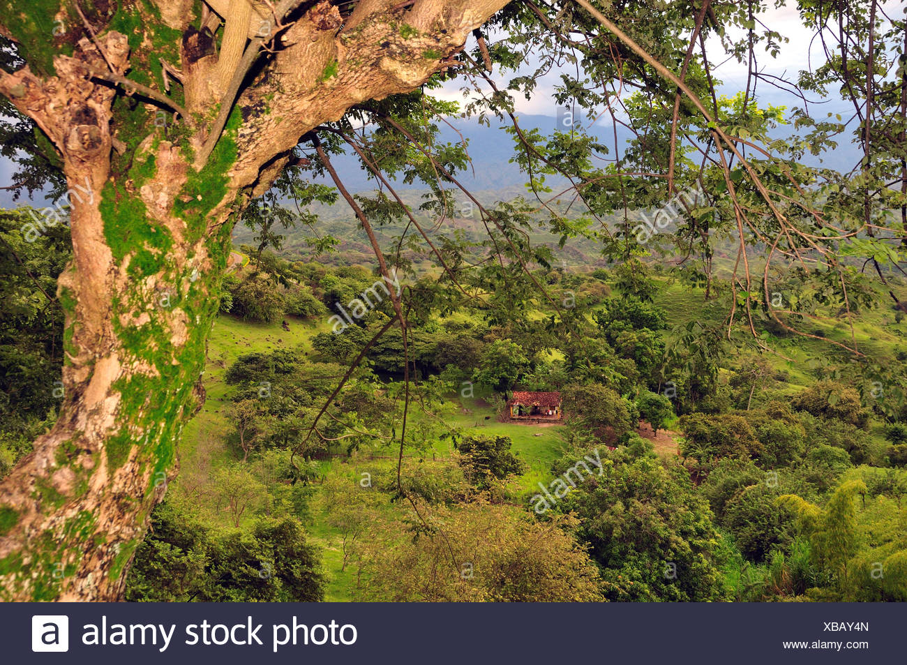 House, country, rural  andes, mountains, green, lush, sodden, Landscape, Popayan, Colombia, South America - Stock Image