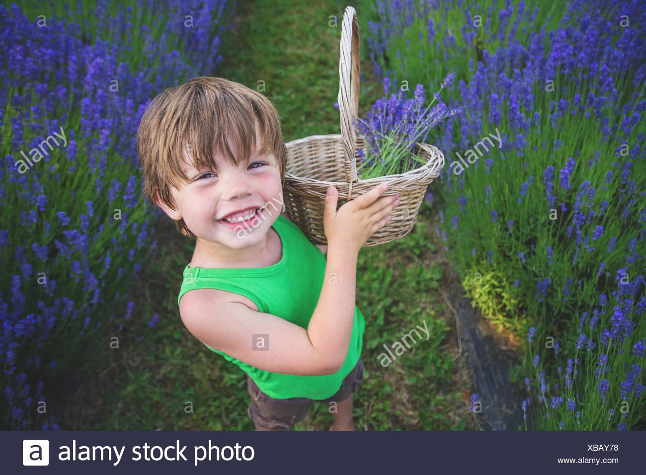 Boy picking lavender in lavender field - Stock Image