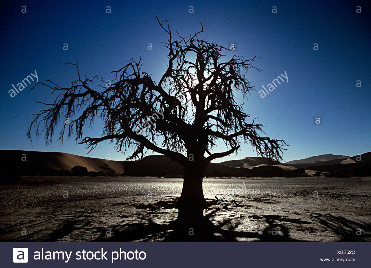 Silhouetted dead tree - Stock Image