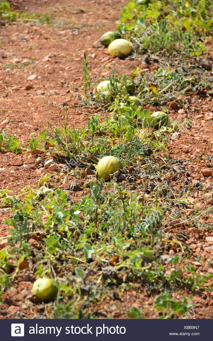 fruits fruit Stock Photo