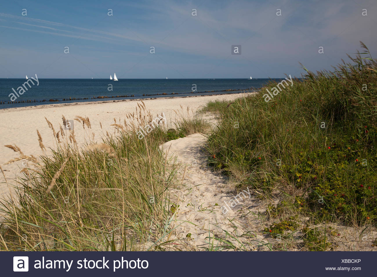 Coast at the Bukspitze or Buk cape, Baltic resort Kuehlungsborn, Mecklenburg-Western Pomerania, PublicGround - Stock Image