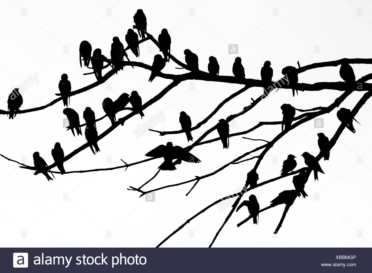 Silhouette of birds perched on the branches of a dead tree above the Occoquan River. Stock Photo
