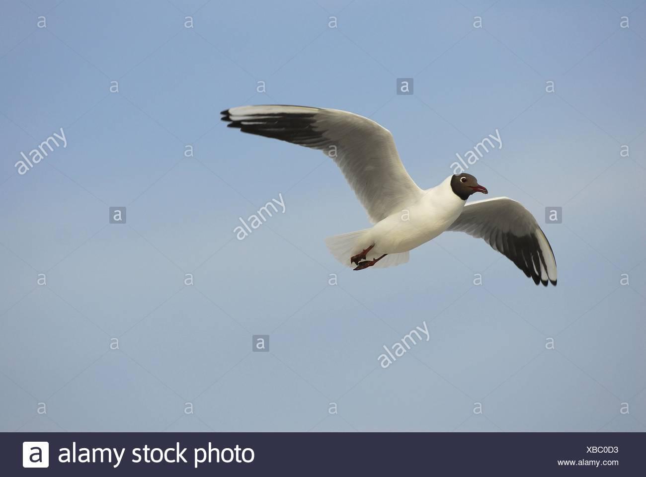 gull - Stock Image