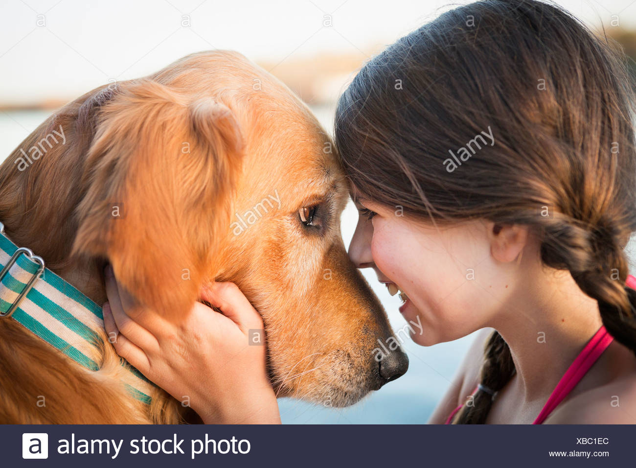 A young girl and a golden retriever dog nose to nose. - Stock Image