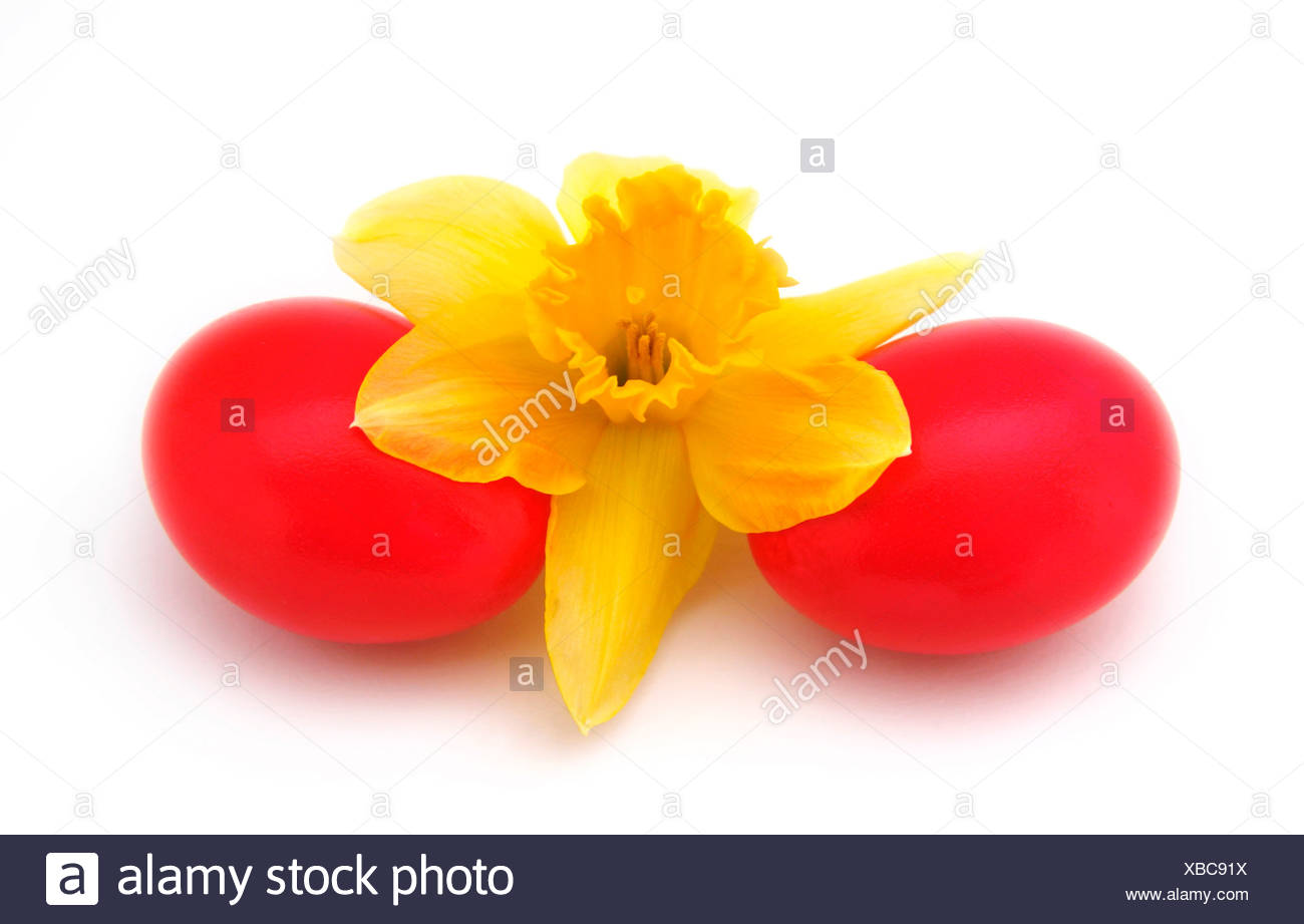 Red easter eggs with a daffodil Stock Photo
