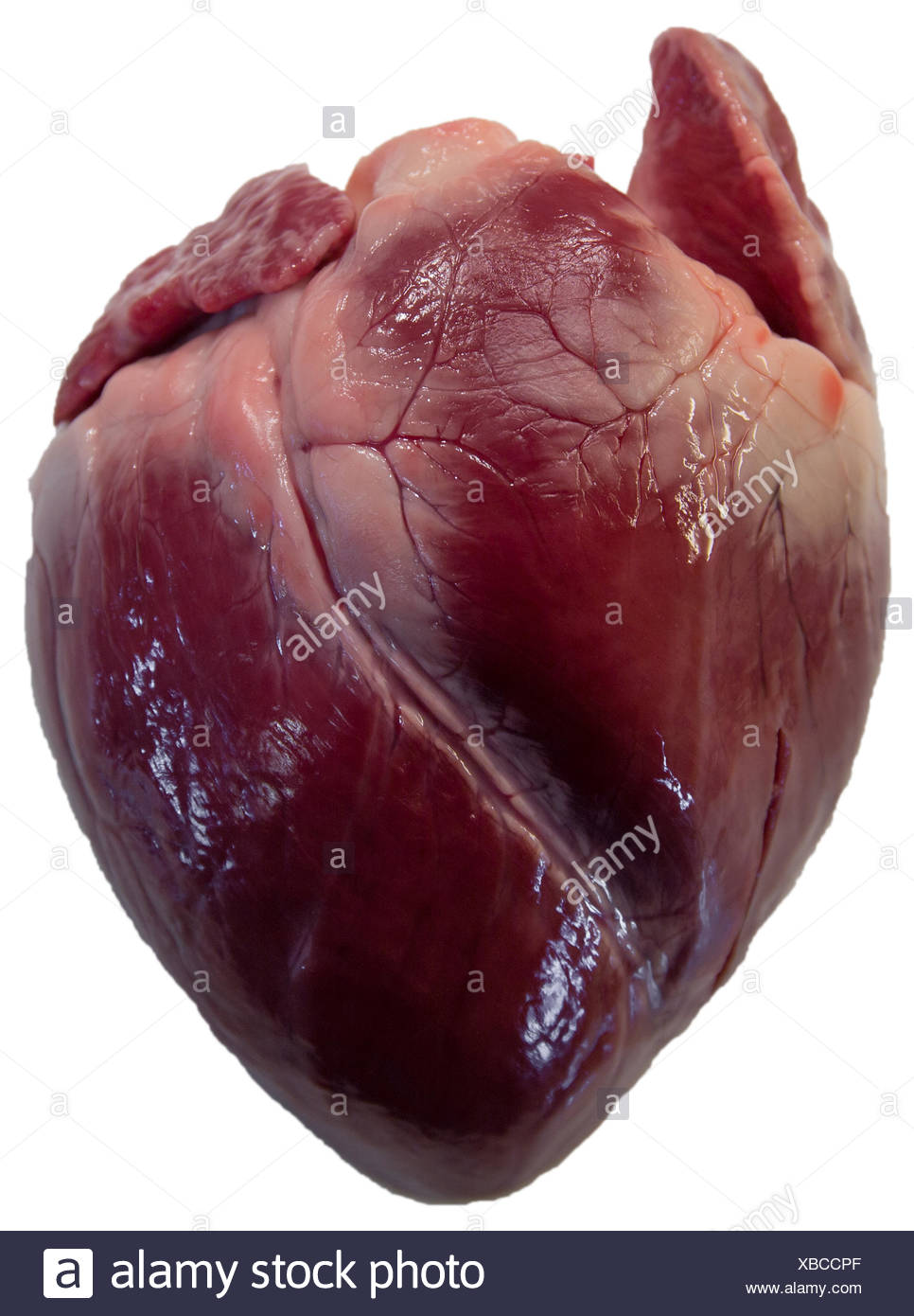 exempted heart (pig heart) - Stock Image