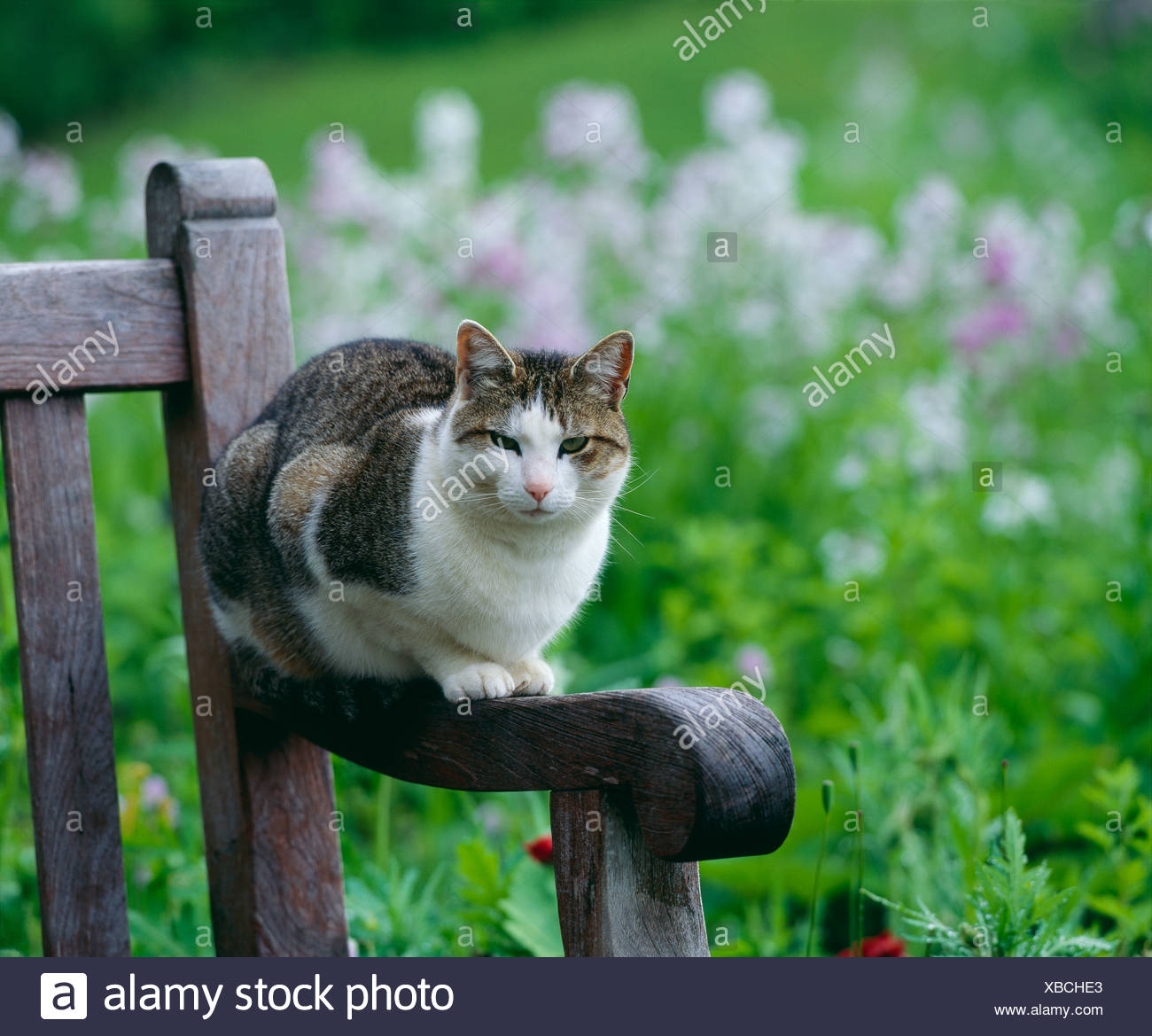 Excellent Tabby Cat On Garden Bench Pennsylvania Stock Photo Inzonedesignstudio Interior Chair Design Inzonedesignstudiocom