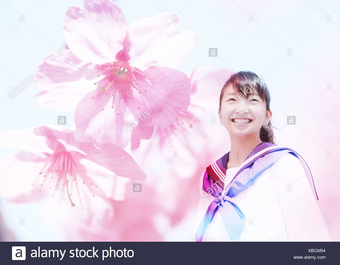 Junior high school girl and cherry blossoms - Stock Image